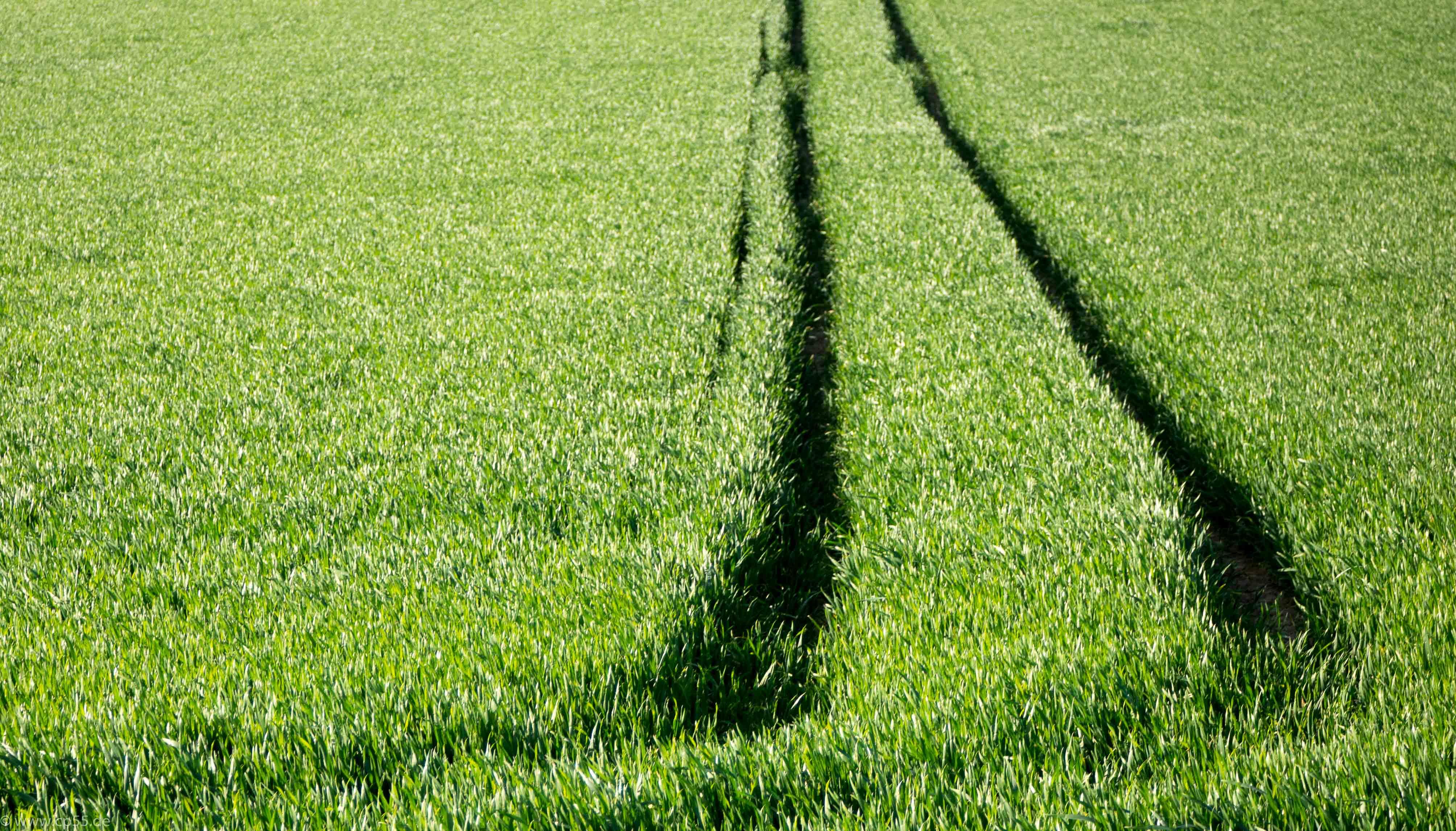 Spuren im Grün