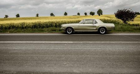 summer Mustang