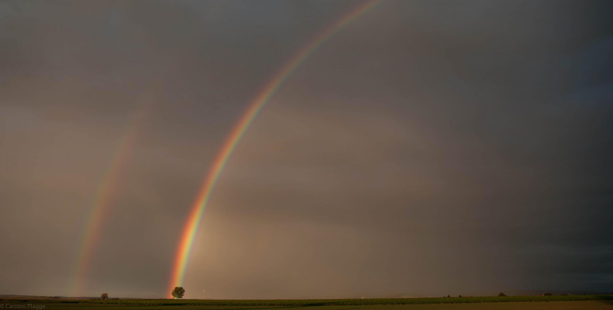 Regenbogen trifft Baum